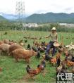 农村致富什么项目好,养殖与旅游业很吃香